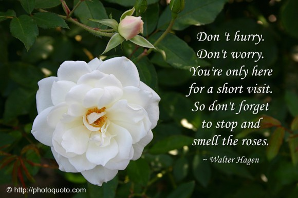 Stop And Smell The Roses Quotes. QuotesGram