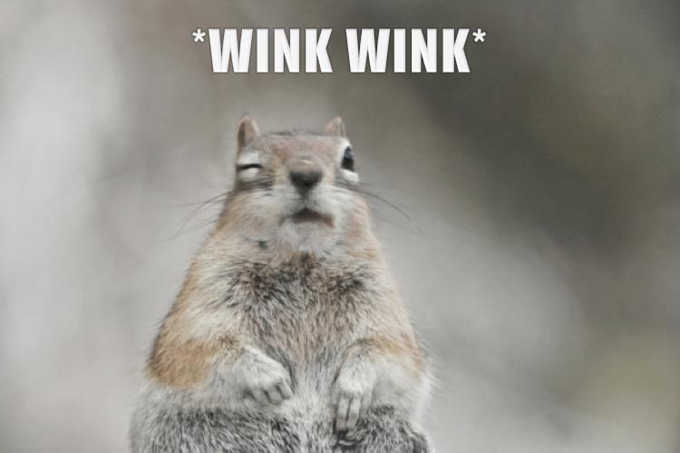 Squirrel Quotes. Quote...