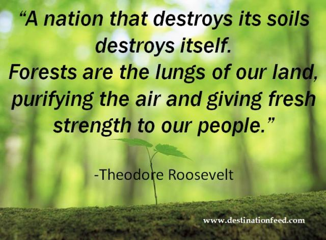 forests are the lungs of the Forests are the lungs of the earth  destruction of the world's forests can result in the death of the world we currently know to what extent do you agree or .