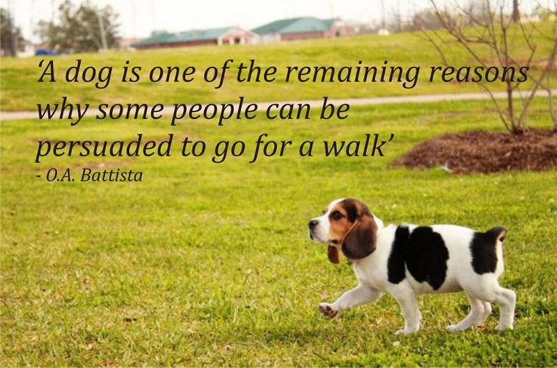 Dog Companionship Quotes Quotesgram