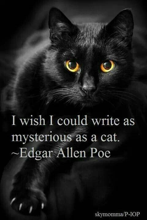 Black Cat Poe Quotes Quotesgram