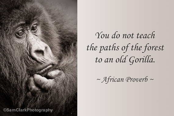 Wildlife conservation quotes and sayings quotesgram - Animal pak motivational quotes ...