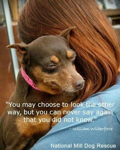 Puppy Mill Quotes Quotesgram
