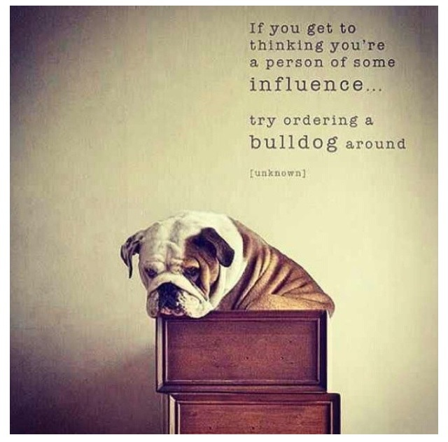 Quotes about english bulldogs quotesgram - English Bulldog Quotes Quotesgram