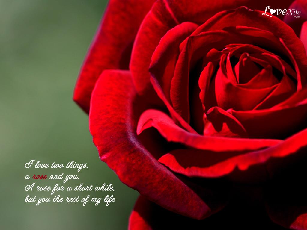 Romantic Flower Quotes Quotesgram