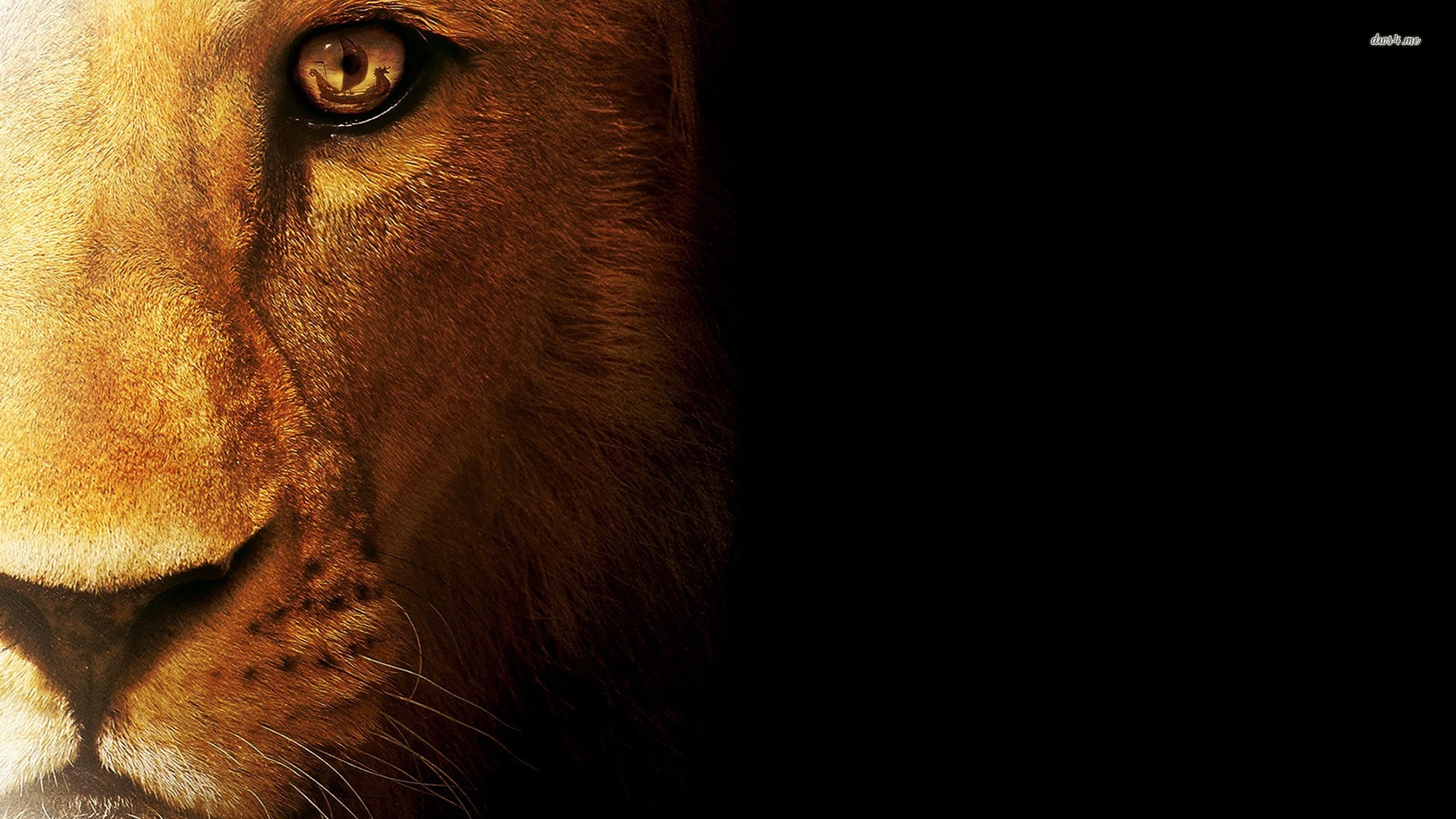 Lion Hd Wallpapers Backgrounds Wallpaper 1920 1080 Picture: Lion Bravery Quotes Wallpaper. QuotesGram