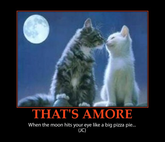 Valentines Day Quotes With Kittens Quotesgram