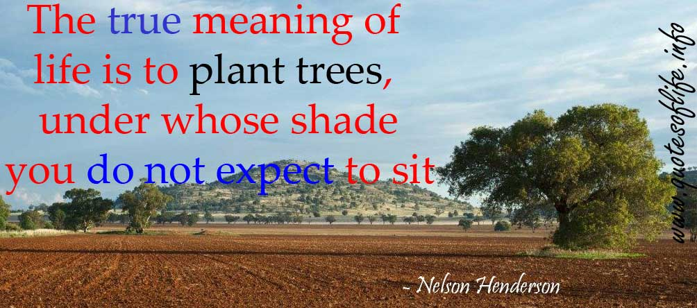 Plant Trees Under Whose Shade Quote : Wildflower quotes for teens quotesgram