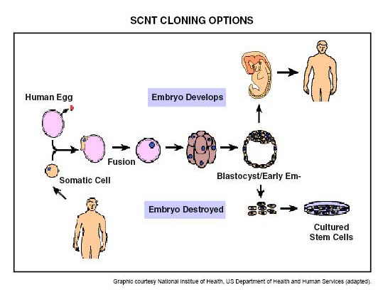 the many benefits of human cloning Benefits of human genetic engineering - how do breakthroughs in this field influence medicine, pharmacology, reproductive technology, and.