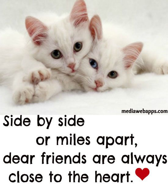 Serious Quotes On Friendship: Serious Friendship Quotes. QuotesGram