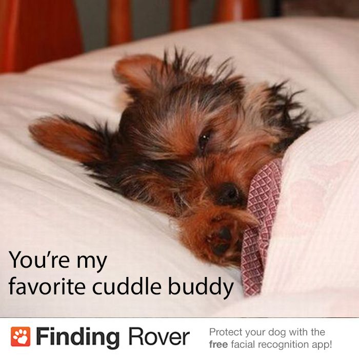 I Want To Cuddle With You Quotes: Cuddle Buddy Quotes For Girls. QuotesGram