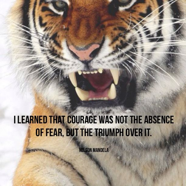 Tiger Strength Quotes Inspirational. QuotesGram