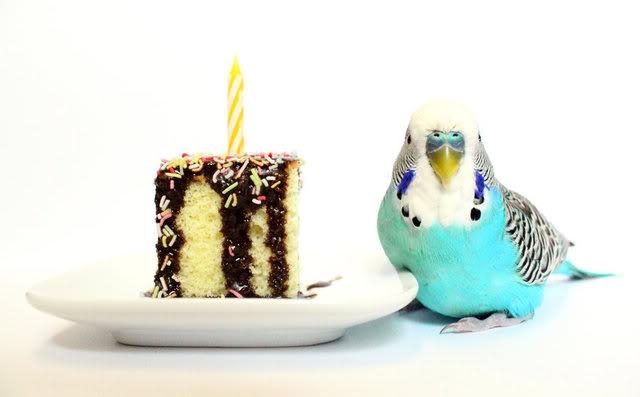 Открытка с попугаем на день рождения