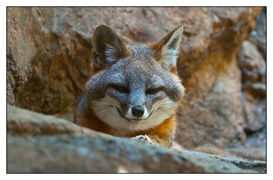 Sly Fox Quotes Quotesgram