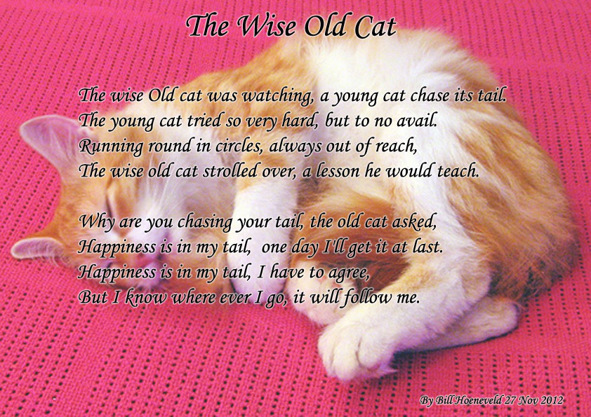 how to give a cat a pill poem