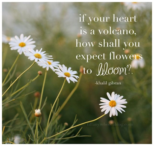 Quotes About Love Blooming : Love Quotes About Blooming. QuotesGram