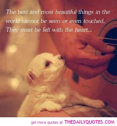 Puppy Love Quotes And Sayings. QuotesGram