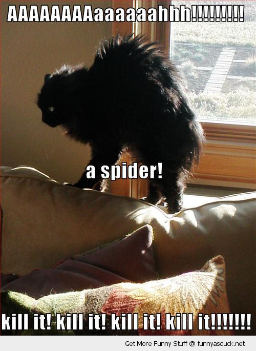 scared of spider funny quotes  quotesgram