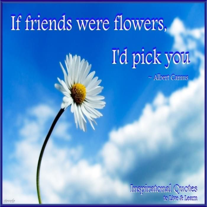 Beautiful Flowers Images With Friendship Quotes: Flowers Are Friendship Quotes. QuotesGram