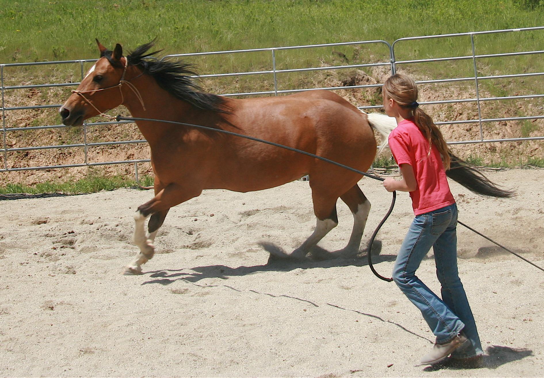 Hollywood horse trainer reveals big-screen tricks |Horse Training
