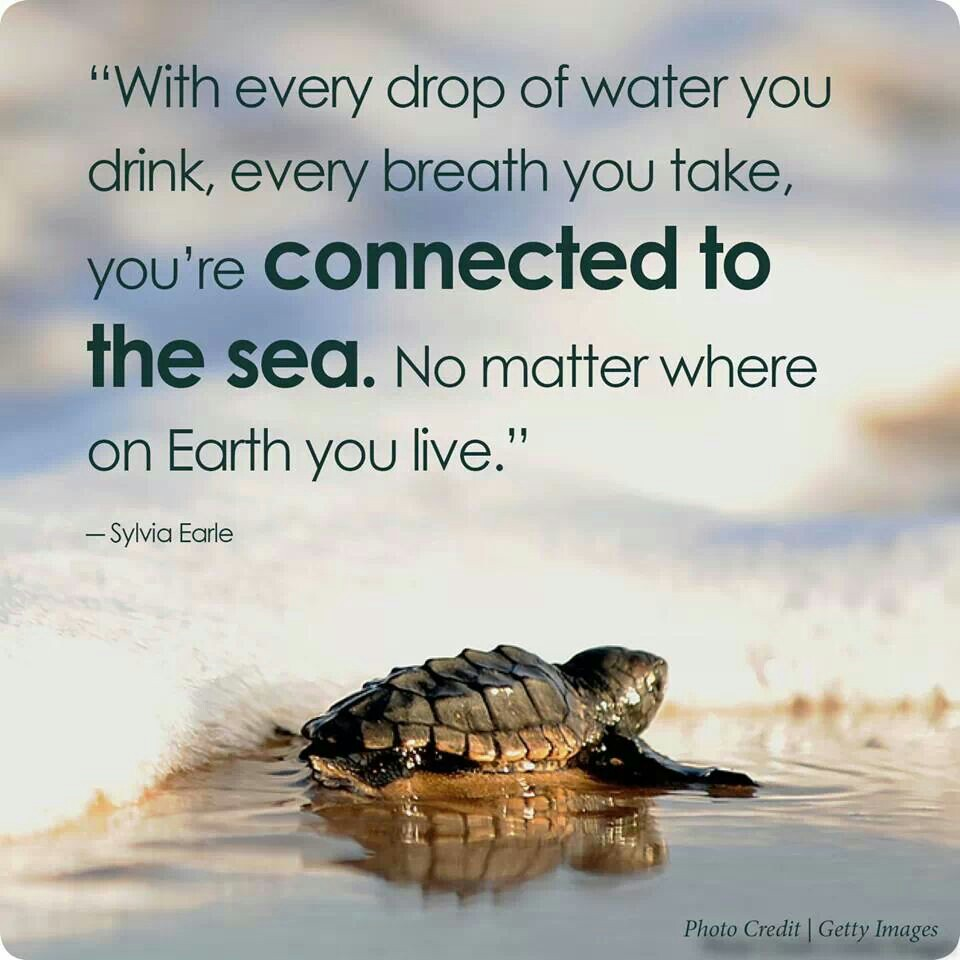 quotes wallpaper sea animals - photo #23