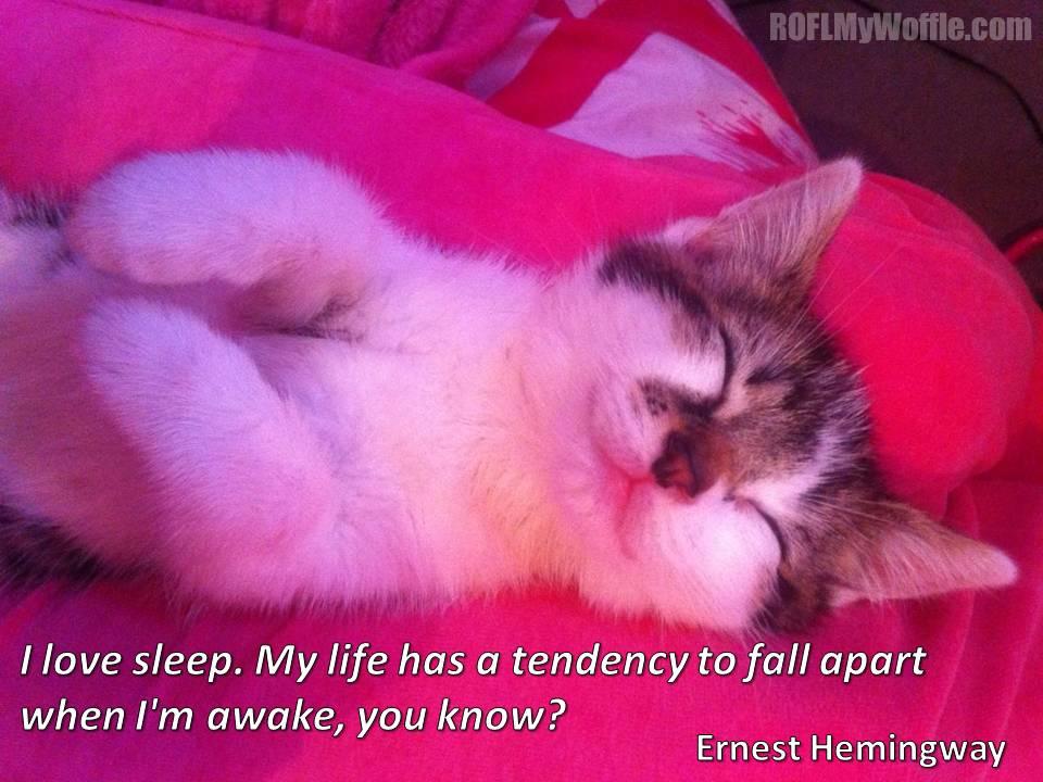 Beautiful kitten quotes