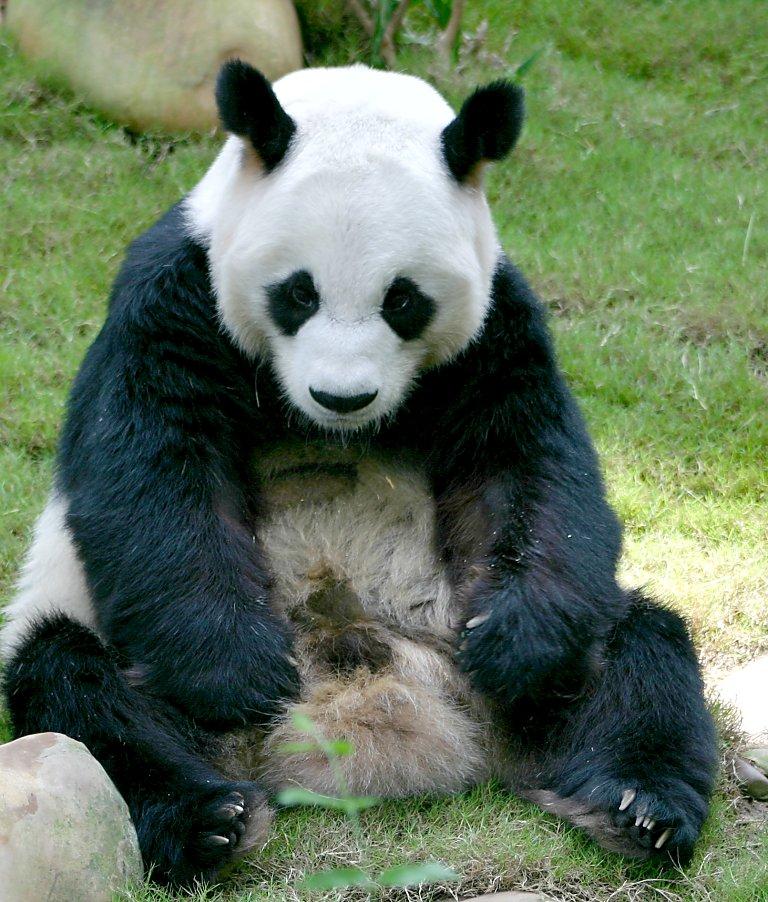 Pandas Predators Quotes Quotesgram