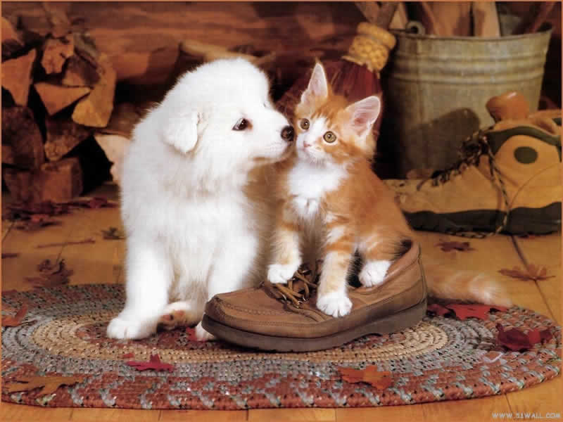 Quotes About Dogs And Cats Together Quotesgram