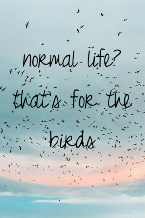 birds, freedom, life, quote, text, no thx, normal life