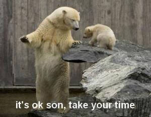 funny bears quotes funny bears funny bears quotes funny panda