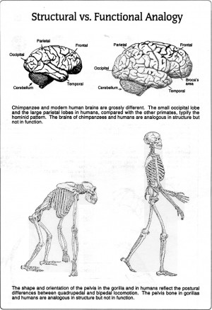 Central Nervous System And