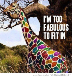 multi coloured giraffe animal too fabulous fit in funny pics pictures ...