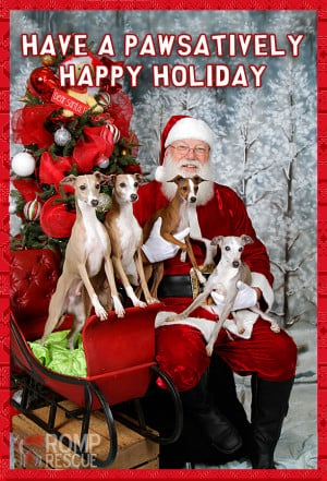 Doggy christmas card - dog holiday card - pet holiday card sayings