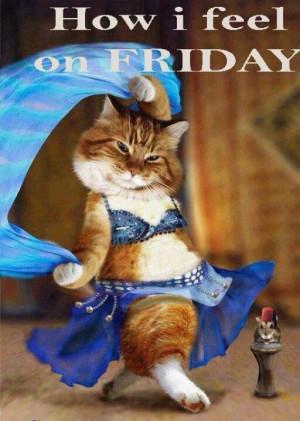 How I Feel On Friday Belly Dance Cat