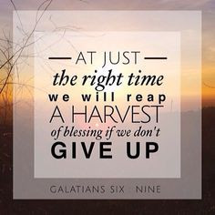 Back > Quotes For > Bible Quotes About Perseverance