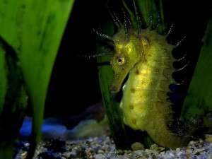 seahorse Images and Graphics