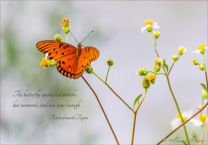 Cedar Key Florida Butterfly Quote