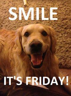 Smile It's Friday Golden Retriever Funny More