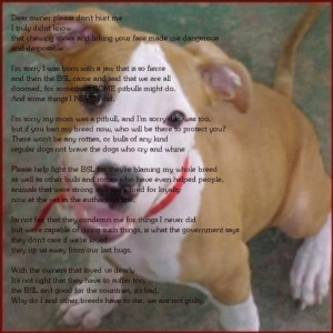 Sorry I'm A Pitbull pic+poem by RENTHEADmeaghan