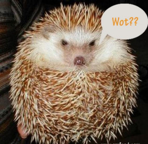 funny and cute hedgehog 08 in Funny and Cute Hedgehogs