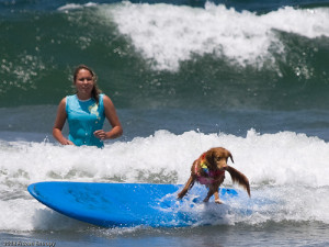 Funny Surfing Dog
