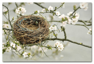 empty nest - I can relate