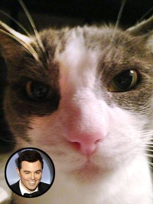 Seth MacFarlane's cat