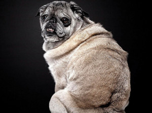 Beautiful Old Dogs: Touching Portraits of Our Senior Best Friends