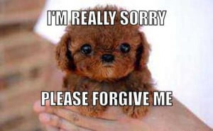 Please Forgive Me Quotes For Her 8 im sorry please forgive me