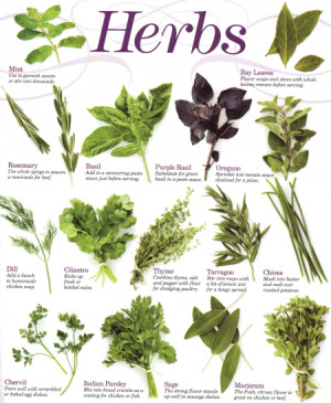 Herb Poster copyright MyWoodenSpoon.com