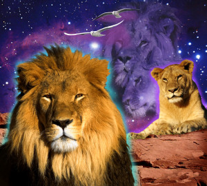 Related Pictures lioness and lion quotes