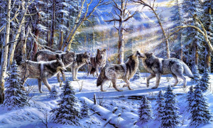 Snow Wolf Forest Hd Wallpaper