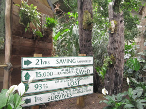 SAVE ALL RAINFORESTS please join!