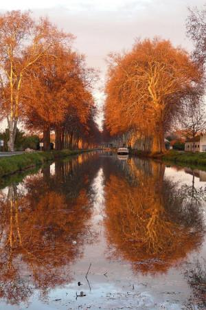 Autumn Leaves Wallpaper...